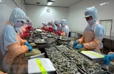 Se mantiene la UE como mayor mercado para la exportación de camarones de Vietnam
