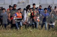 Llama Vietnam al restablecimiento del papel de la autoridad palestina en Gaza