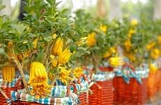 Vietnam posee gran potencial para la exportación de plantas ornamentales