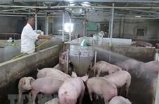 Asiste empresa vietnamita a Laos en gestión de información sobre ganadería