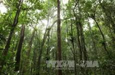 Vietnam trabaja por el desarrollo forestal sostenible en la región central