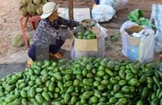 Promueve Vietnam exportación de sus aguacates a Estados Unidos