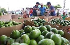 Instan en Vietnam a mejorar calidad de productos agrícolas para aumentar sus exportaciones