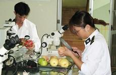 Amplía Vietnam la exportación de frutas al mercado estadounidense