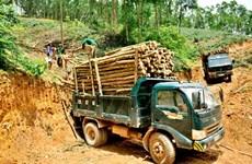 Establecerá  Vietnam regulaciones sobre productos madereros