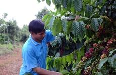 Aumentan exportaciones vietnamitas a Tailandia