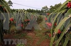Provincia vietnamita trabaja por garantizar agua para el riego en la estación seca