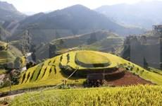 Celebrarán Festival de Terrazas de Arroz en provincia vietnamita de Yen Bai