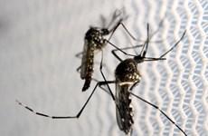 Realiza Tailandia acciones contra la expansión de la fiebre Chikungunya