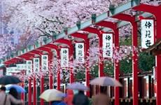 Creció el turismo vietnamita a Japón más de un 40 por ciento en mayo
