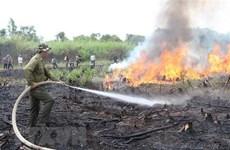Insta premier vietnamita a reforzar medidas preventivas contra incendios forestales