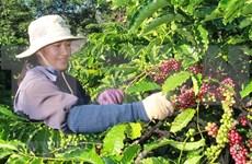 Valoran que el EVFTA abre puertas de Europa  a productos agrícolas de Vietnam