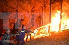 Se enfrasca Vietnam en controlar grave incendio forestal en provincia central