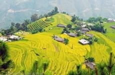 Aumenta número de turistas a provincia vietnamita de Lao Cai