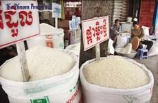 Exportación de arroz de Camboya a China aumentó 66 por ciento en primer semestre de 2019