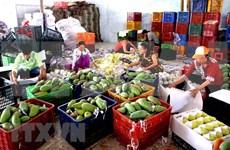 Ingresa Vietnam en seis meses monto multimillonario por exportaciones hortofrutícolas