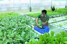 Planean establecer estándares comunes para productos orgánicos en ASEAN