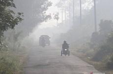 Destruyen incendios forestales en Indonesia más de 30 mil hectáreas de bosque