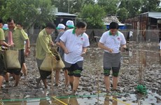 Vietnam se lanza al cultivo de manglares en el Delta del Mekong