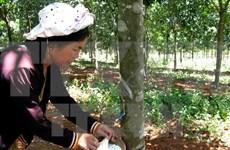 Aumenta valor de las exportaciones de caucho vietnamita en primer semestre de 2019