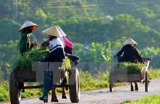 Reportan en Vietnam avances en la modernización de zonas rurales