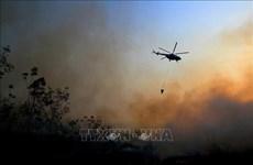 Despliega Indonesia miles de efectivos para combatir incendios forestales