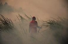 Exige presidente indonesio mayores esfuerzos para acabar con incendios forestales en el país