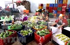 Cayen exportaciones de frutas y verduras de Vietnam a China