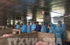 Dispuesta Alemania a compartir experiencias con Hanoi sobre lucha contra peste porcina africana