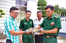 Liberan rara tortuga marina en la naturaleza