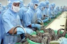 Exportadores de camarones vietnamitas gozan de impuesto cero a Estados Unidos