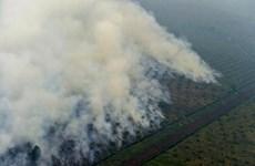Indonesia refuerza lucha contra incendios forestales