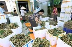Impulsa Vietnam exportaciones de longan a Australia