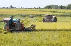 Espera Vietnam superar este año en 150 mil toneladas la cosecha arrocera de 2018