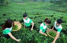 Comunidad empresarial de Vietnam busca encaminarse hacia desarrollo sostenible