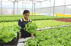 Proyecta Ciudad Ho Chi Minh impulsar cooperación con Australia en agricultura de alta tecnología
