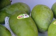 Conquista mango vietnamita mercado de Chile