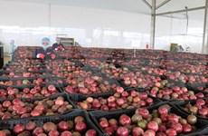 Entra en servicio en Vietnam importante centro procesador de productos agrícolas