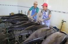 Aumenta Grecia importaciones de atún vietnamita