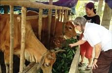 Provincia central vietnamita ayuda a víctimas del Agente Naranja/Dioxina