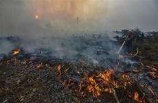 Mantienen en Malasia la suspensión de clases por contaminación ambiental