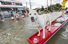 Evacuan a decenas de miles de personas por inundaciones en Tailandia