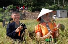 Celebran en Vietnam Festival del Com Tu Le de la  etnia Thai