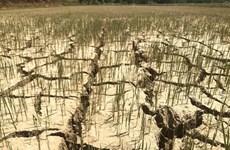 Vietnam respalda a declaración de emergencia ecológica