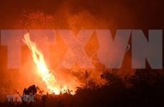 Sufren más de 900 mil indonesios de infecciones respiratorias agudas por incendios forestales