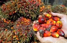 Suspende Indonesia impuestos de exportación del aceite de palma crudo