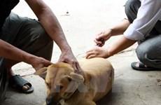 Registra Vietnam anualmente un centenar de casos mortales por la rabia