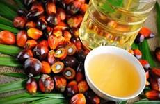 Suspende Indonesia gravamen a exportación del aceite de palma crudo