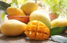 Promueven introducir el mango vietnamita de Hoa Loc en Corea del Sur