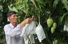 Seis frutas frescas de Vietnam conquistan mercado global
